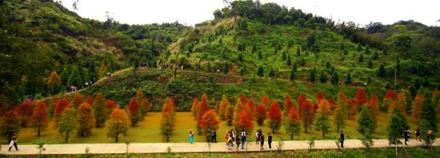 來一趙浪漫台三線落羽松祕境的旅程吧 !