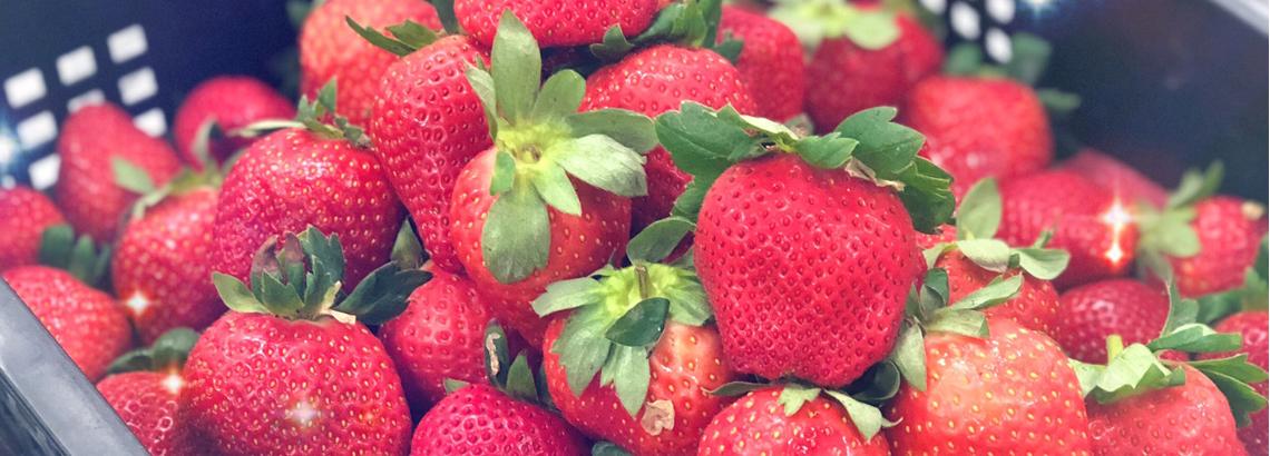 泰安草莓季/體驗粉紅果實酸甜魅力