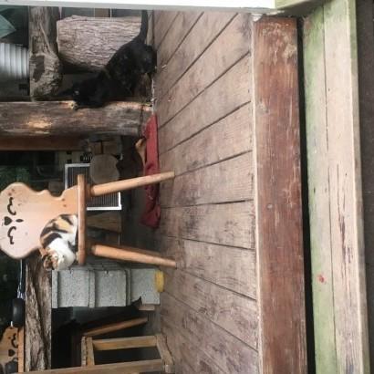 嘉義阿里山 哈莫瓦那露營區