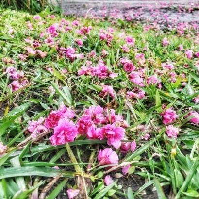 宜蘭礁溪 鷗漫景觀營地
