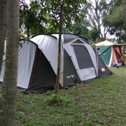 台南白河 雲頂松林露營區