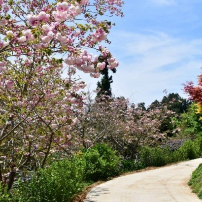 桃園復興 拉拉山 雅比斯露營區