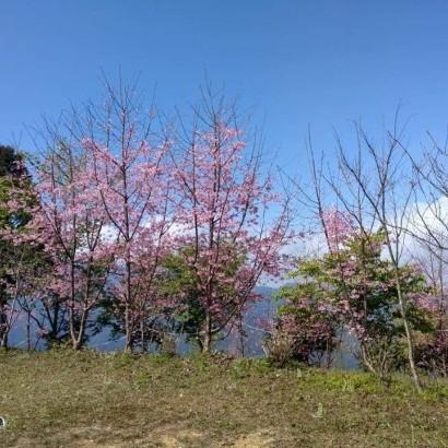 新竹五峰 戀上瓜麗露營區