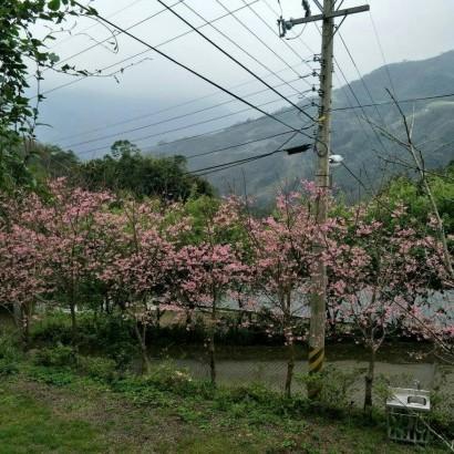 新竹尖石  梅花山莊