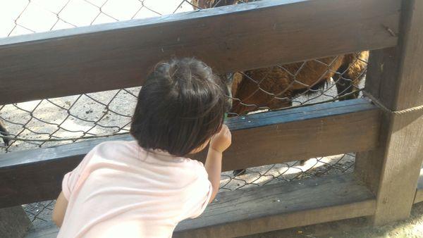 37露。。石硦童軍營區。。_4650.jpg