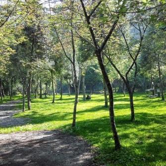 烏松崙張家堡森林梅園