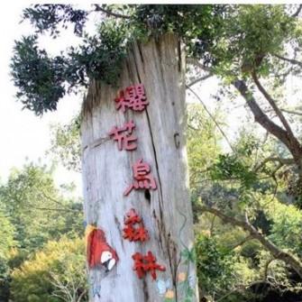 台中新社 櫻花鳥森林露營區