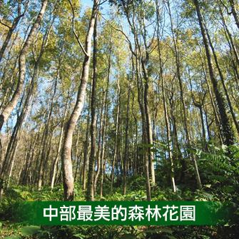 台中東勢 東勢林場