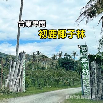 台東卑南 初鹿椰子林