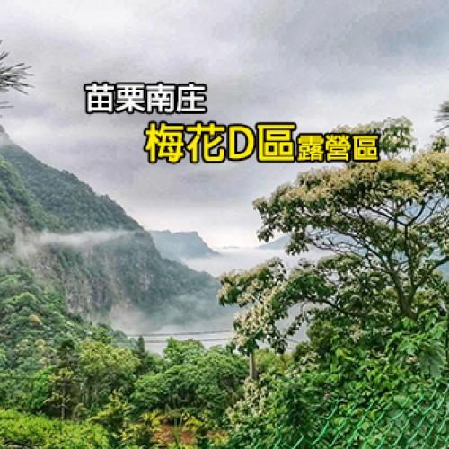 苗栗南庄 梅花D區